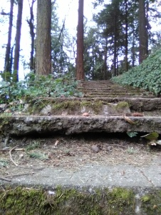 Mossy Stairs in park